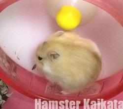 ハムスターの遊び道具・おもちゃ