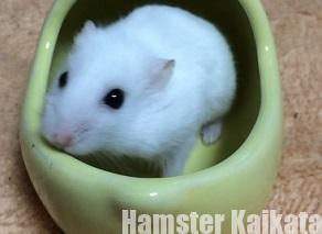 ハムスターはお風呂には入らない!