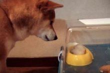 ハムスターと犬の同居