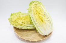 ハムスターの白菜の与え方と適量