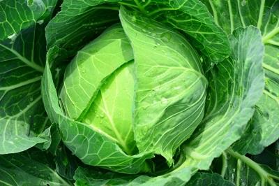ハムスターにおすすめの野菜