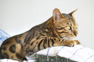 猫はハムスターの天敵